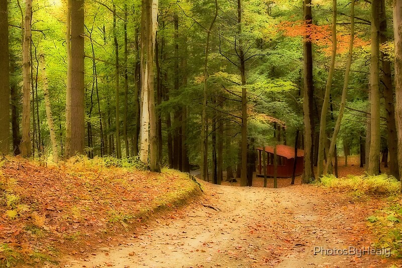 Autumn Path II by Photos by Healy