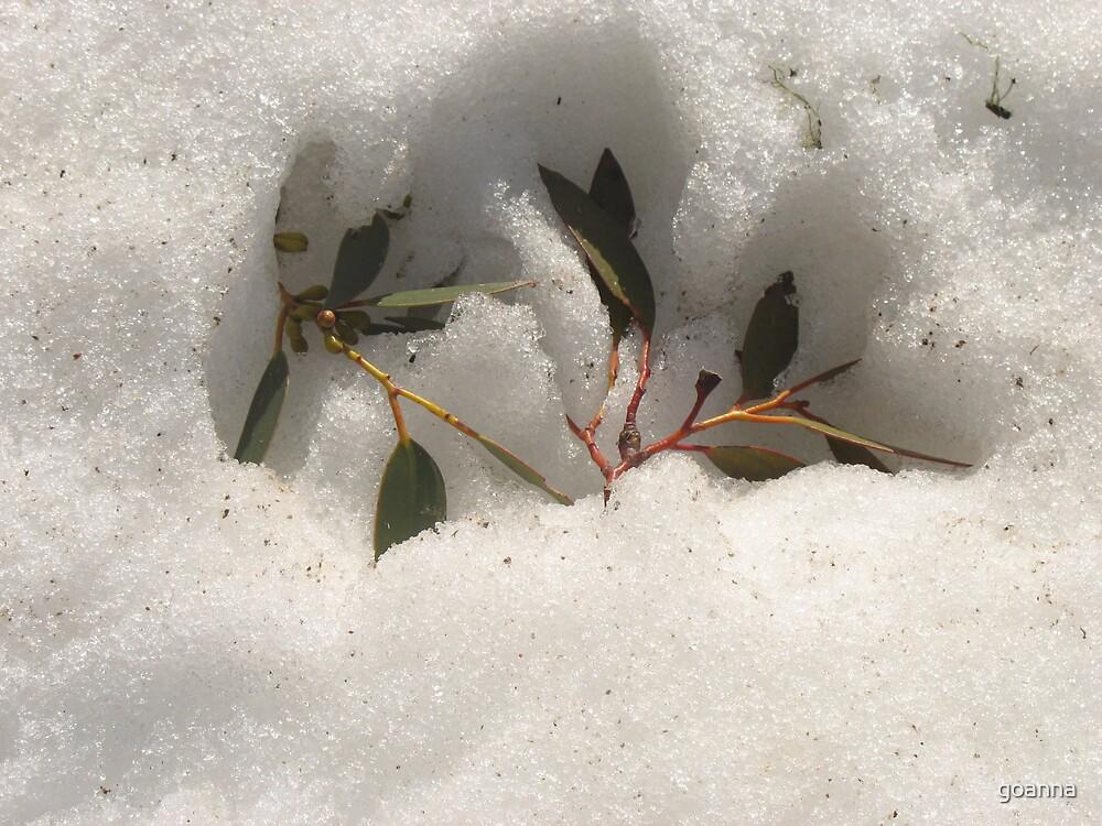 Spring melt, Australian Alps by goanna