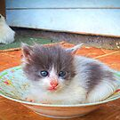 A dish of cuteness by © Kira Bodensted