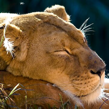 Sleeping Beauty by ehor