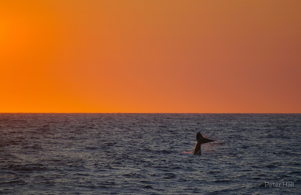 Diving under a Rosy Sky by Peter Hall