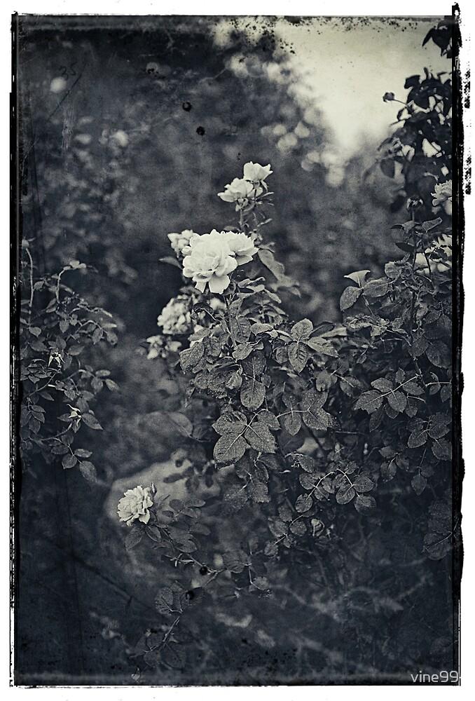 vintage flower by vine99