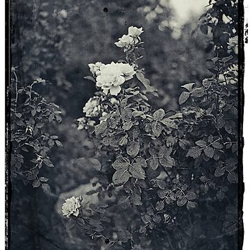 vintage flower by vine99