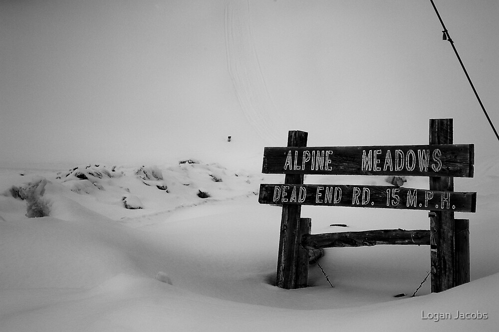 alpine meadows by Logan Jacobs