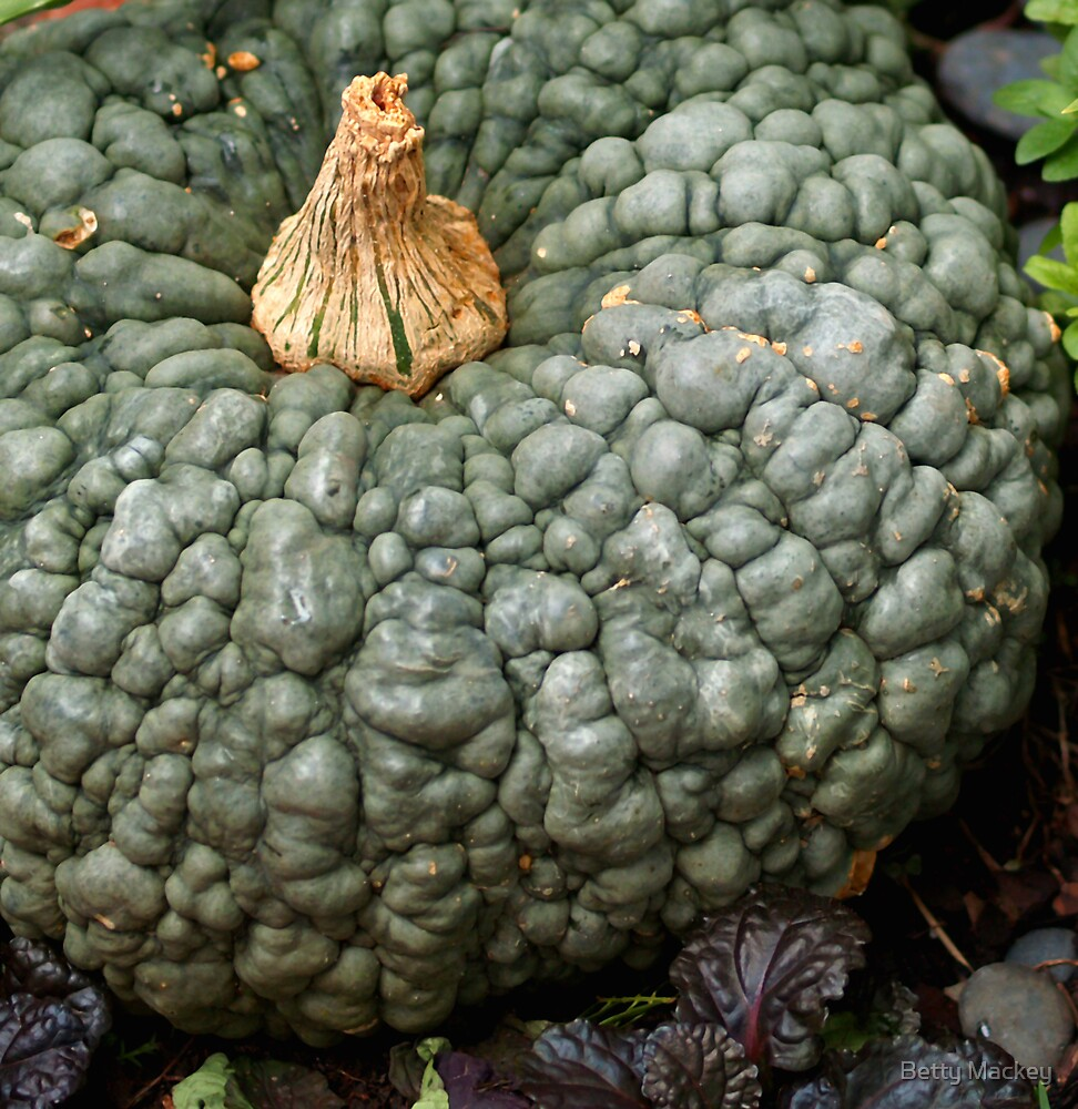 Peanut Pumpkin by Betty Mackey
