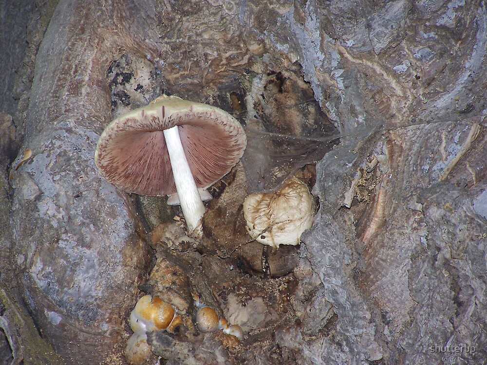 Mushroom Life by shutterup