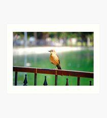 ballerina bird Art Print