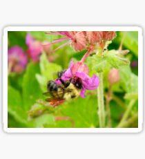 Pollinator  Sticker