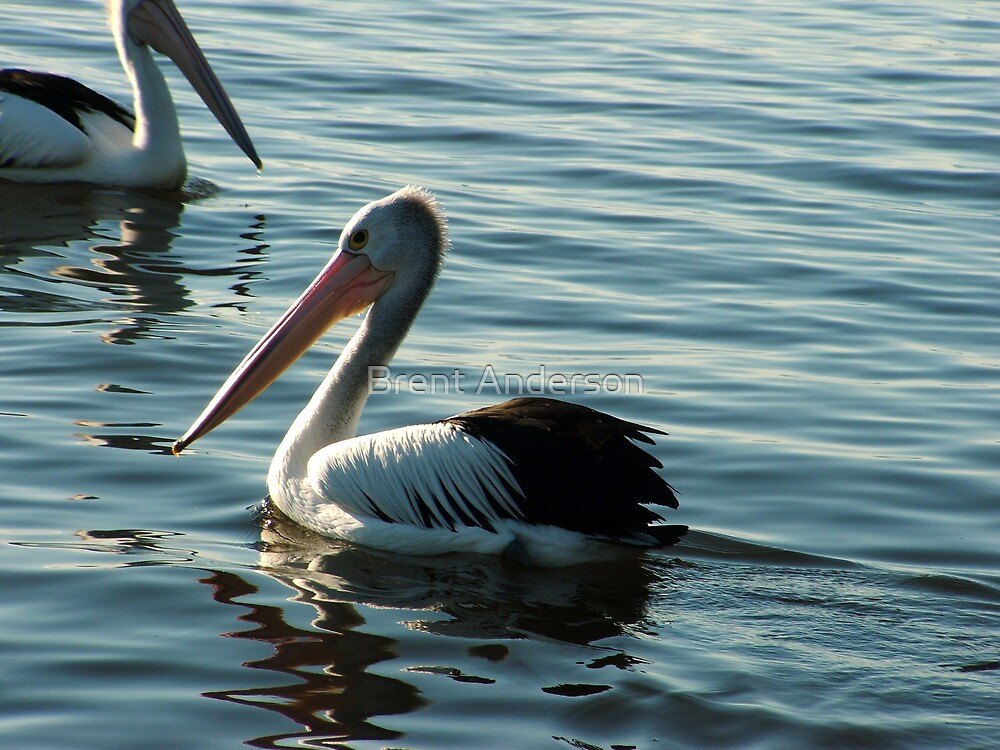 Pelican Business  by Brent Anderson
