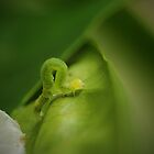 Tiny green caterpillar by AnnaKT