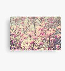 Magnolia Blossoms Early Spring Botanical Canvas Print