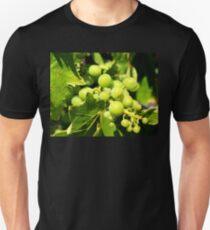 September Wine Grapes T-Shirt