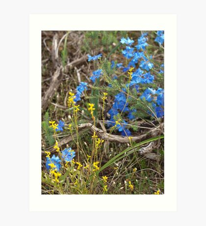 Lechenaultia and Branch Art Print