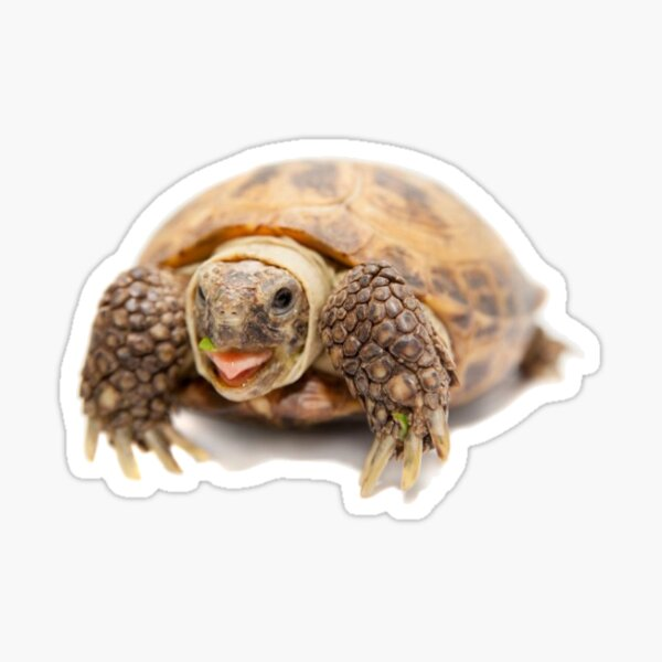 tortoise Sticker