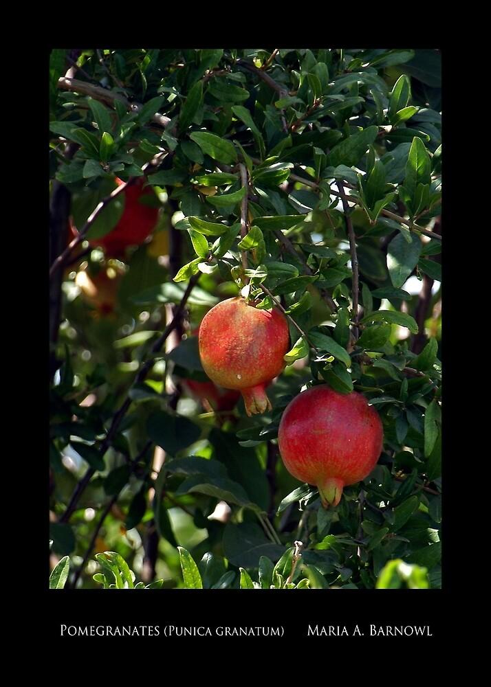Pomegranates - Cool Stuff by Maria A. Barnowl