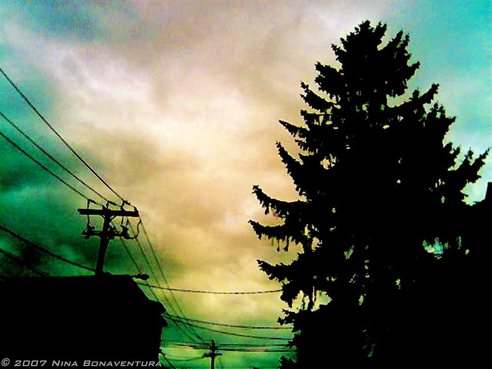 perfect pine by NinaB