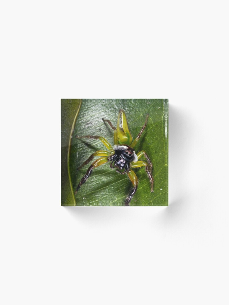 Alternate view of Jumping spider Acrylic Block