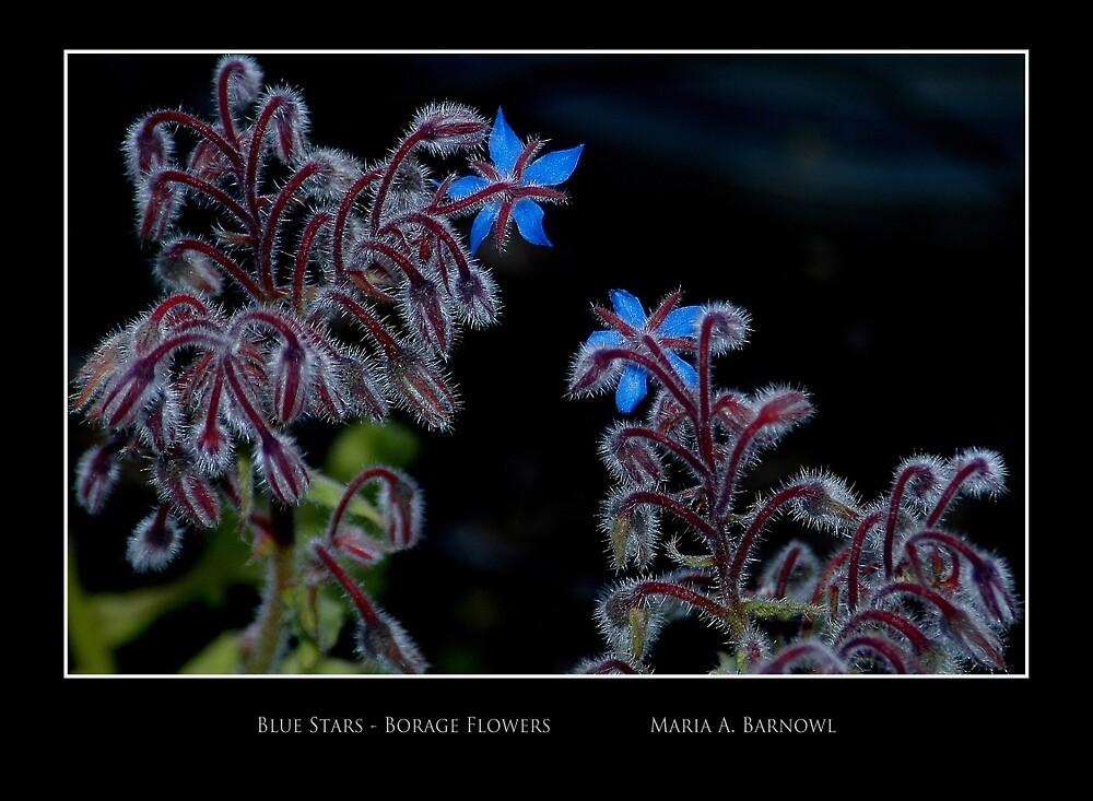 Blue Stars - Cool Stuff by Maria A. Barnowl