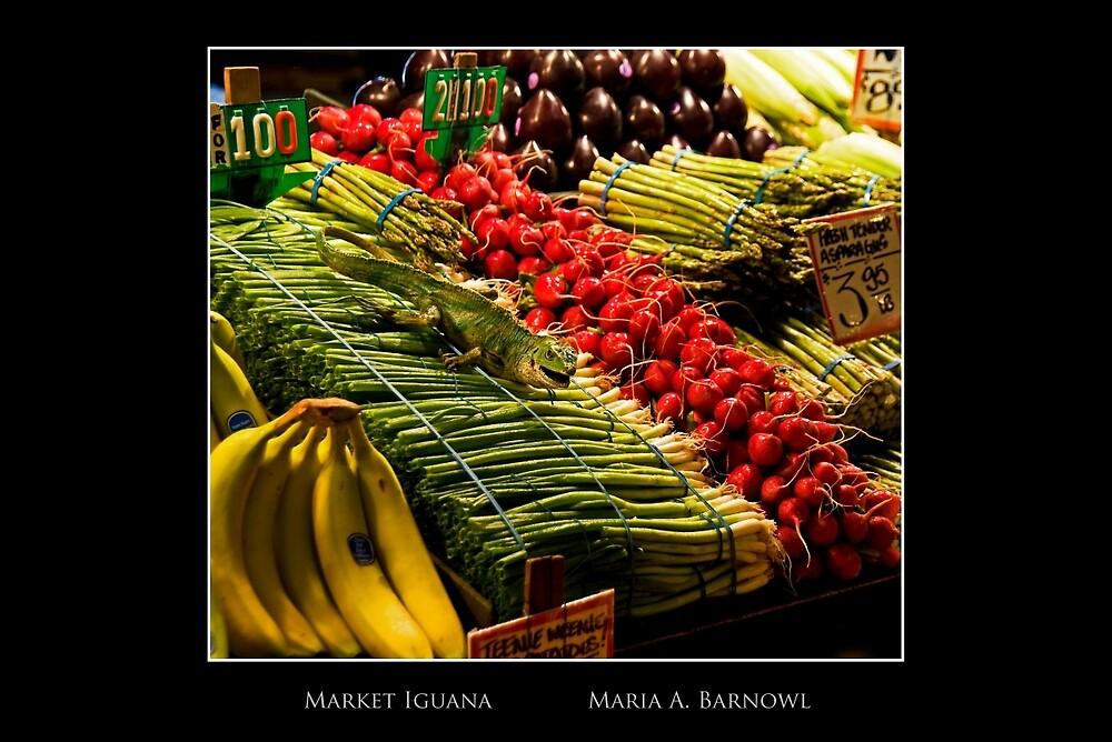 Market Iguana - Cool Stuff by Maria A. Barnowl