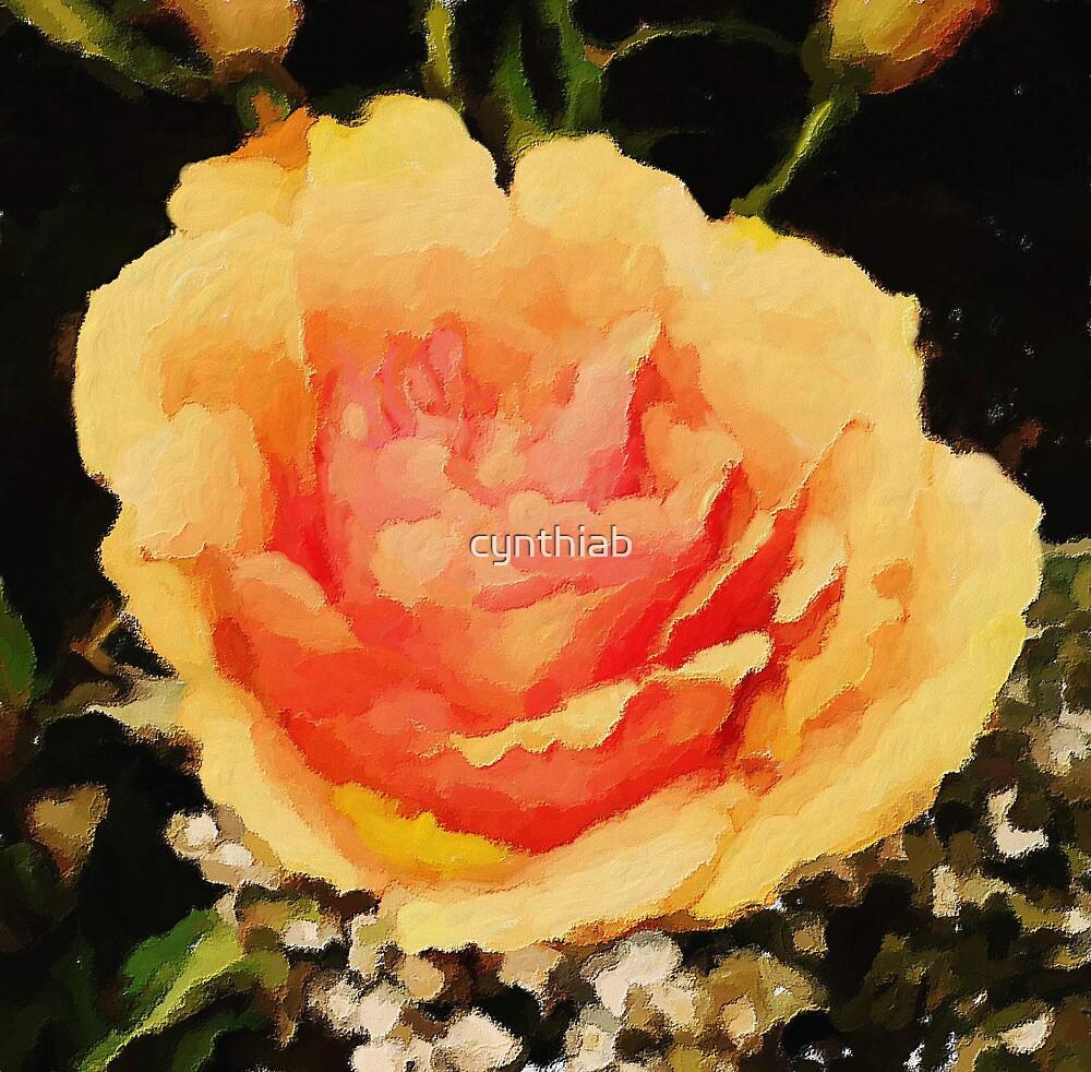 orange rose by cynthiab