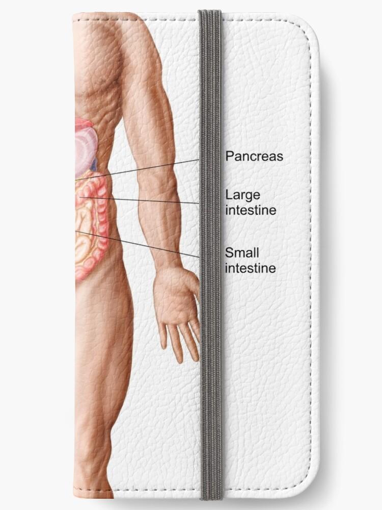 Fundas tarjetero para iPhone «Anatomía del sistema digestivo humano ...