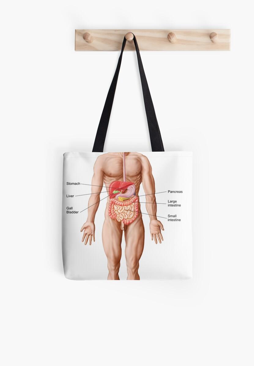 Bolsas de tela «Anatomía del sistema digestivo humano ...