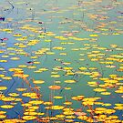 The Golden Lilly Pond by Franklin Lindsey
