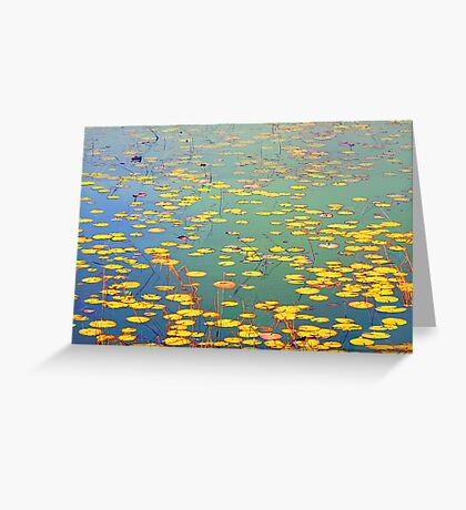 The Golden Lilly Pond Greeting Card