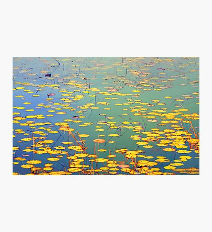 The Golden Lilly Pond Photographic Print