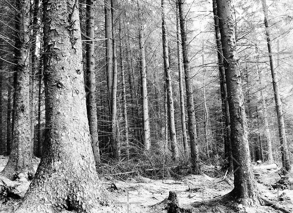 woodland by Dave Ward