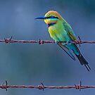 Rainbow Bee - Eater by Wildpix