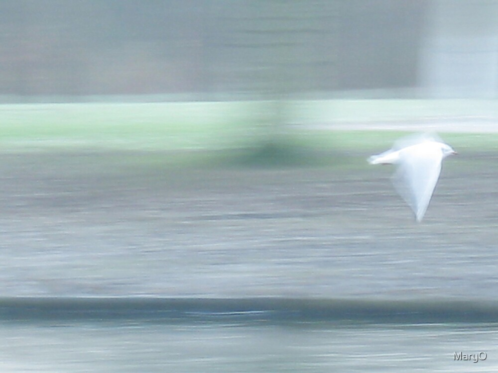 Fly Bird Fly by MaryO