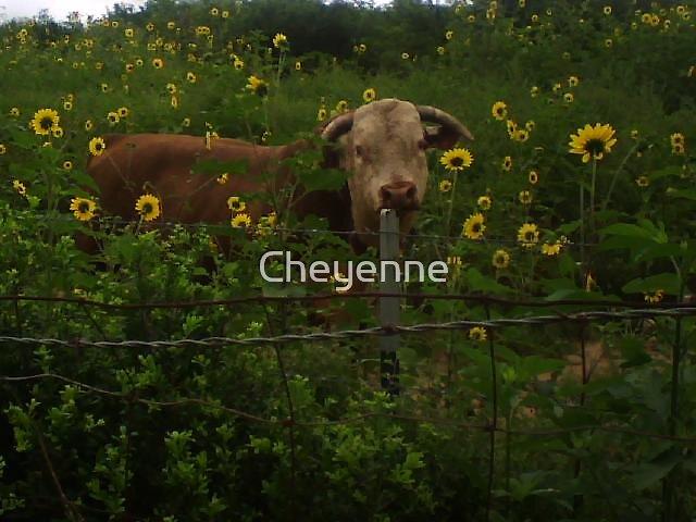 Meet My Neighbor by Cheyenne
