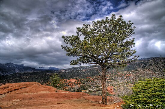 One Tree Hill by John  De Bord Photography