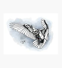 Lazer owl Photographic Print