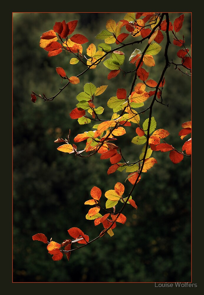 Autumn Glory by Louise Wolfers
