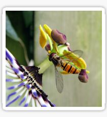 Hoverfly on a Passionflower Sticker