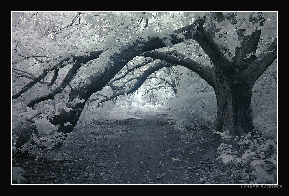 Infra Red Oaks by Louise Wolfers