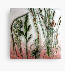 Mornington Peninsula Grasslands 10 Canvas Print