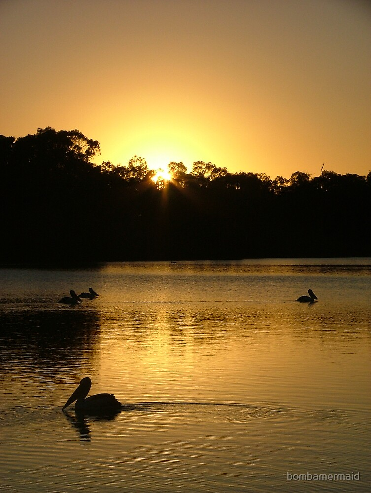 Sunrise with Pelicans in Renmark SA by bombamermaid