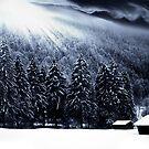 Winter Sonata by Steven  Sandner