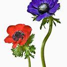 like a flower by Claudia Reitmeier