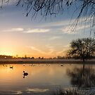 Sunrise at Bushy Park by Stephen Liptrot