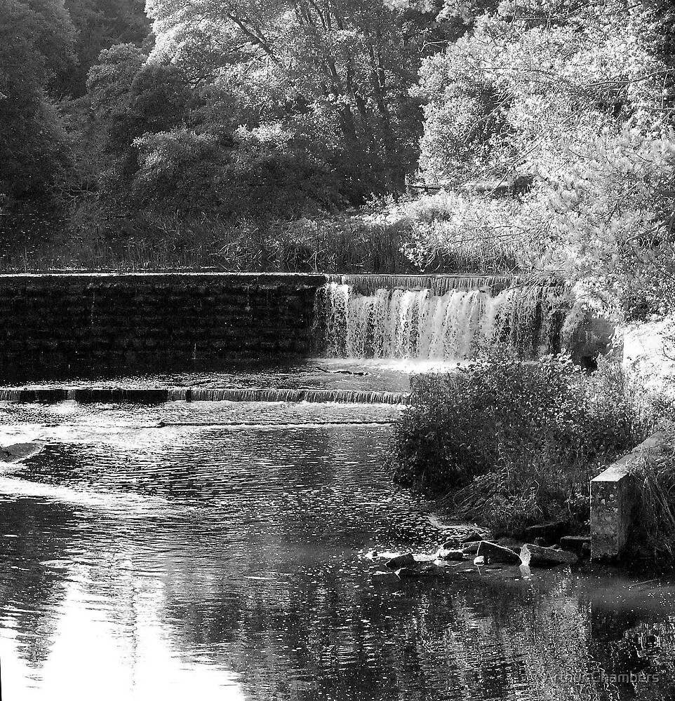 Northumberlands hidden gardens.......... by Arthur Chambers