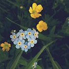 Forget-Me-Not heart in a Scottish Summer Meadow by Yvie Johnson