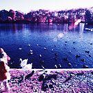 Feeding the birds by John Violet