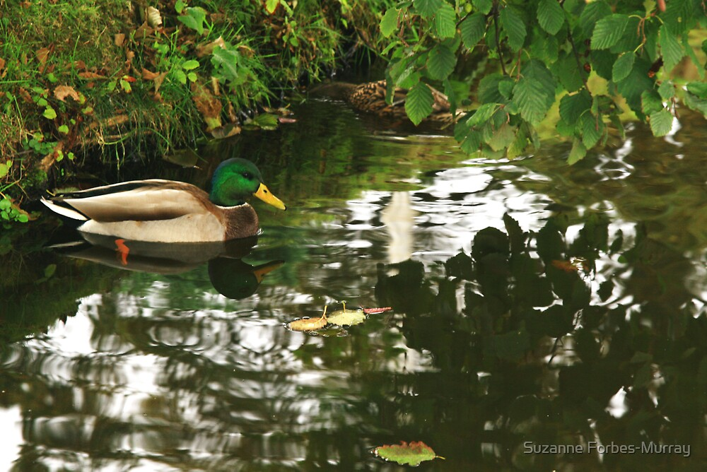 Hide and Seek by Suzanne Forbes-Murray