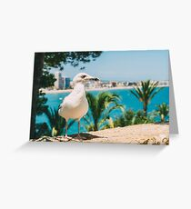 White Seagull Bird Portrait With Tropical City Skyline In Background Greeting Card