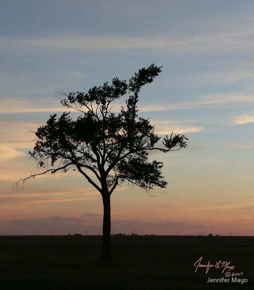 Lost Tree by Jennifer Mayo