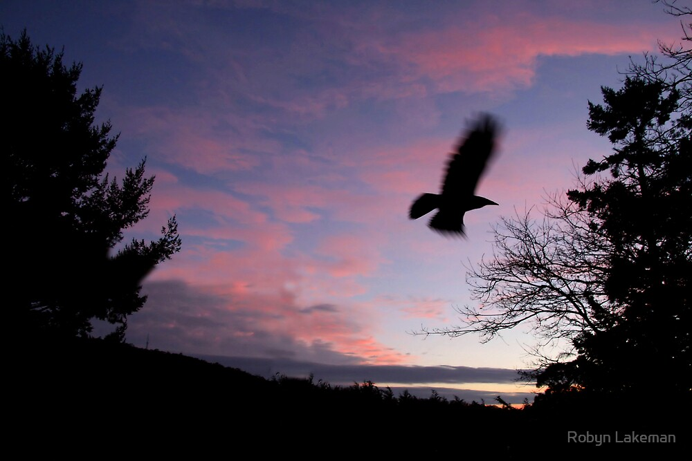 Crow at sunset by Robyn Lakeman